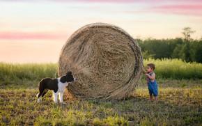 Picture summer, dog, boy, hay
