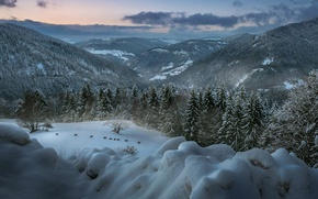 Picture winter, forest, animals, landscape, mountains, Germany, deer, Baden-Württemberg, The black forest