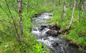 Wallpaper spring, all green, Forest stream