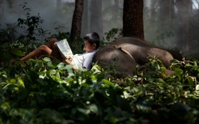 Picture forest, elephant, boy, book
