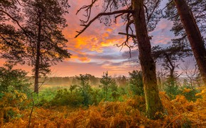 Wallpaper clouds, autumn, grass, the sky, dawn, forest, glade, the bushes, trees, fog