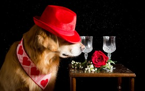 Picture flowers, rose, hat, glasses, tie, hearts, black background, red, table, Retriever