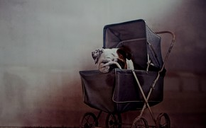 Picture house, dog, stroller