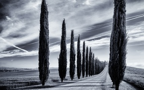 Picture road, trees, Italy, Tuscany
