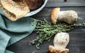 Picture greens, white, mushroom, napkin