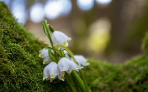 Picture Flowers, Spring, Moss, Lilies of the valley