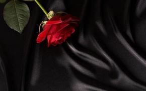 Picture rose, black, fabric, red, closeup