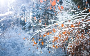 Wallpaper trees, branches, snow, forest, leaves