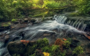Picture water, river, moss