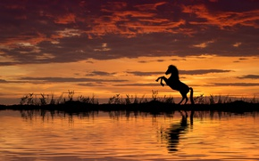 Wallpaper sunset, horse, water, horse
