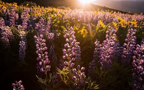 Picture light, flowers, morning