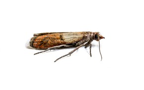Picture flying, insect, white background