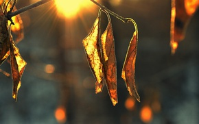 Picture leaves, the sun, dry