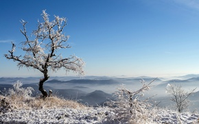 Picture the sky, snow, mountains, tree