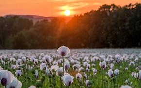 Picture sunset, nature, Maki