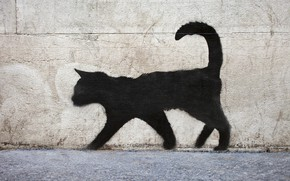 Wallpaper black cat, texture, wallpaper., beautiful background, graffiti, black cat, beautiful background, who walks by himself, ...