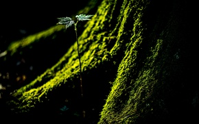 Picture nature, tree, moss