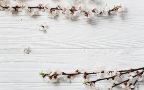 Picture Flowers, Spring, Branches, Wooden background