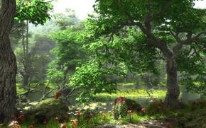 Picture forest, vegetation, pond, HiddenPond