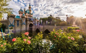 Wallpaper morning, dawn, Disneyland, Disneyland, roses