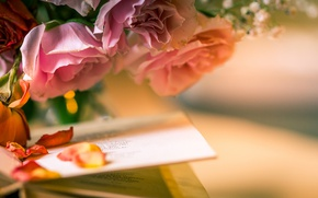 Wallpaper book, roses, petals, style, flowers