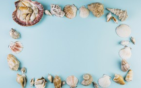 Picture sea, background, Shell