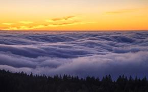 Picture fog, CA, USA, state Park, Mount Tamalpais