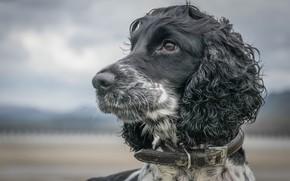 Picture muzzle, dog, bokeh