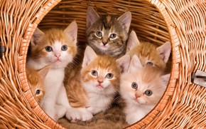 Picture basket, kittens, cute