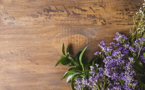 Picture background, Greens, Wild flowers