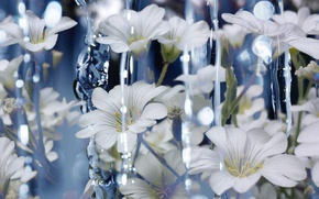 Picture Water, Flowers, Water, Cerastium, White Flowers, White flowers