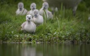 Picture water, pond, bird