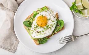 Picture lime, breakfast, Breakfast, scrambled eggs, toast, plate, avocado, egg