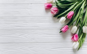 Picture flowers, colorful, tulips, pink, white, white, fresh, wood, pink, flowers, beautiful, tulips, spring, tender