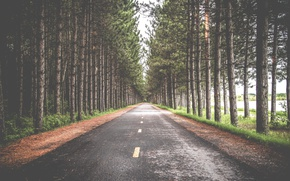 Picture nature, pine, autumn, road