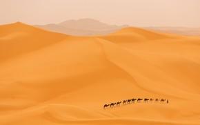 Picture desert, dunes, camels, caravan