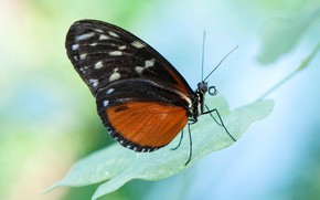 Picture nature, butterfly, moth