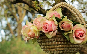 Picture summer, leaves, flowers, nature, background, tree, rose, roses, bouquet, branch, petals, garden, gentle, pink, basket, ...