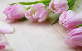 Picture Flowers, Tulips, Pink, Buds