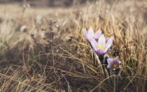 Picture flowers, nature, spring, cross