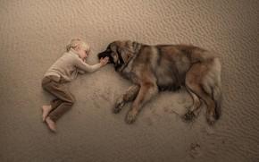 Wallpaper dog, friends, friendship, boy, sand