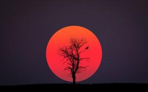 Wallpaper black, red, sun, bird