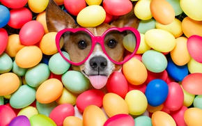Picture dog, colorful, glasses, Easter, hearts, happy, dog, Easter, eggs, holiday, funny, the painted eggs