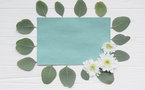 Picture Paper, Leaves, Chrysanthemum