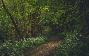 Picture forest, trees, France, path