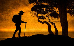 Picture trees, silhouette, The Hiker, tourist