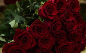 Picture red, bouquet, Roses, buds
