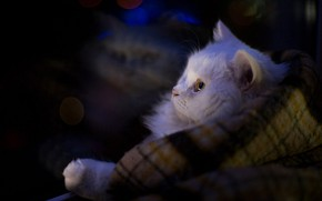 Picture cat, cat, look, light, comfort, darkness, reflection, the dark background, heat, muzzle, white, plaid, bokeh, …