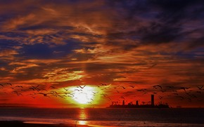 Picture sea, the sky, sunset, birds, island, beauty