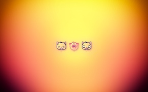 Picture cat, dog, funny, pig
